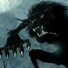 Spinoff: Lobo